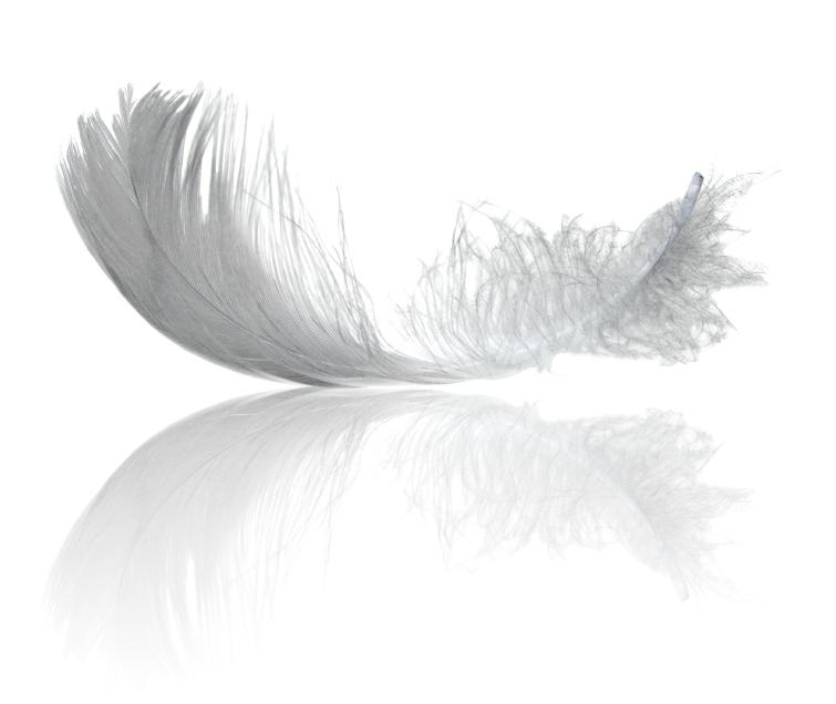 В Кузбассе делают птичий корм из перьев